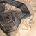 Vers les châles de l' Inde : L'éblouissant savoir-faire que révèlent ces tissages arachnéens, l'usage de teintures naturelles disparues (l'indigo par exemple), de techniques complexes (l'ikat) n'empêchent pas la tradition d'être sans cesse revisitée par les désigners indiens (ici, Bina Rao ICB 1 à 48) : nouveaux procédés (soie strech), mélange de matières (soie et jute), etc. autres traditionns : Châle de Santinikétan, la ville de R.Tagore, au Bengale : le trait de la brodeuse dessine sur la soie animaux, symboles, personnages, du quotidien familier. Brodeuses des monts Nilgiri, Est de l'Inde : Une mère et sa fille, de la tribu Toda, brodent de motifs géométriques distinctifs les châles que tisse et porte ce peuple pastoral des montagnes.