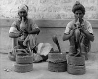 charmeurs de serpents Inde